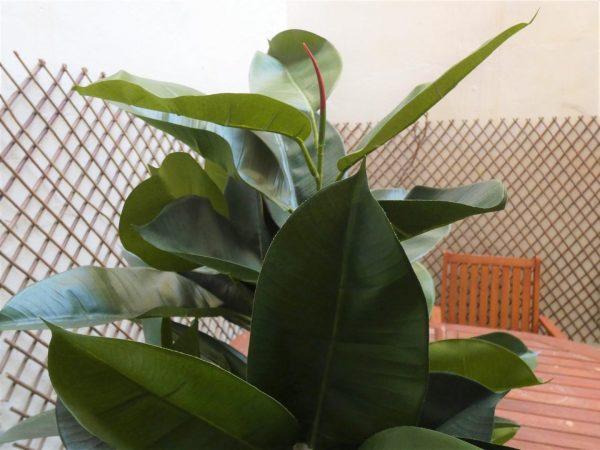 Para exterior gracias a su capa de rptección rayos UV, replicada con gran exactitud. Un producto 100% SOSTENIBLE